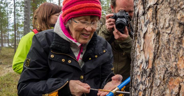 Årringsdatering i Øst-Finnmark