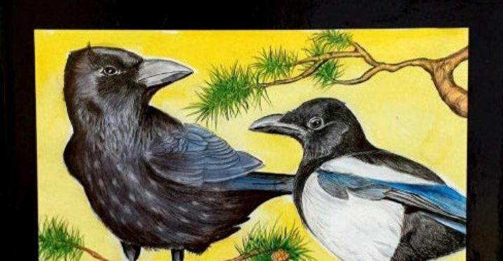 Varis ja harakka – Kråka og sjura